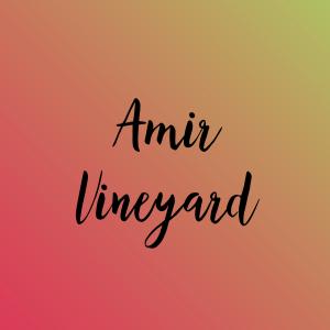 Amir Vineyard